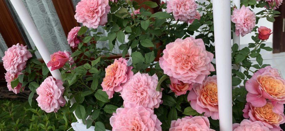 mơ thấy mang theo hoa